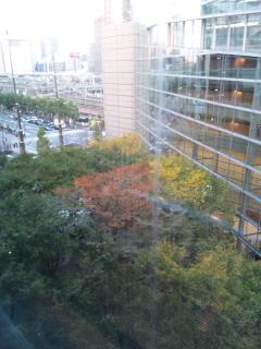 東京国際フォーラムの紅葉