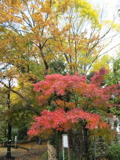 川崎市緑化センターの紅葉